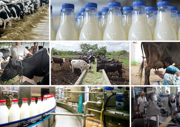 How To Start Dairy Milk Processing Industry